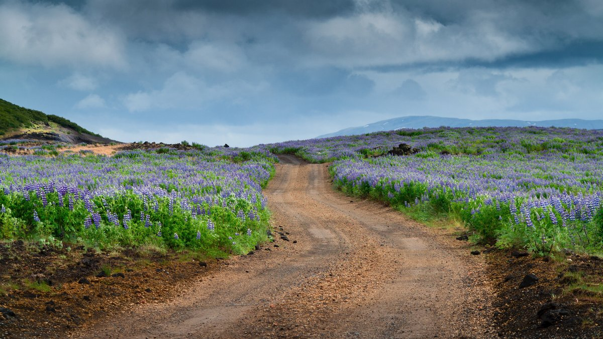 A dirty road boarded by blooming flowers.